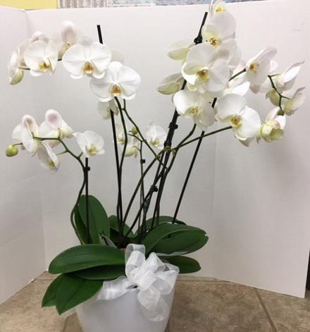 Photo of flowers: Grande Orchid Planter