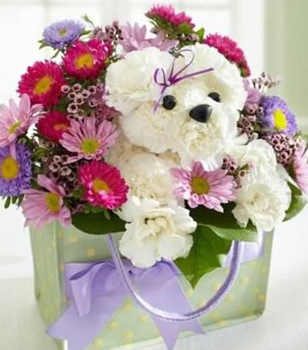 Photo of flowers: Flower Doggie or Teddy Bear