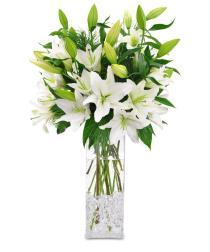 Photo of Wintere White Lilies C1211 - C1211
