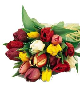 Photo of flowers: Tulips Gift Wrapped