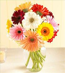 Photo of flowers: Gerbera Daisy Vased
