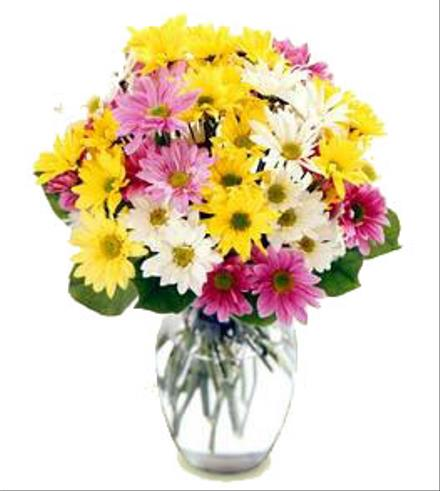 Photo of flowers: Mixed Daisies Vase Bouquet