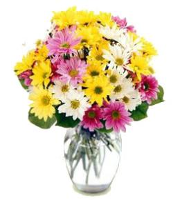 Photo of Mixed Color Daisies Vased - FFDP