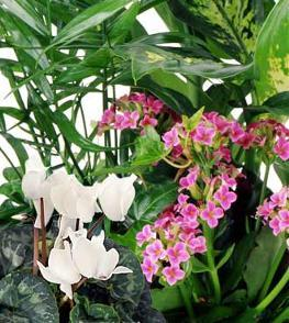 Photo of Planter Basket Green and Blooming Plants - EO-6059