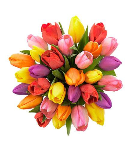 Photo of flowers: Rush of Color Assorted Color Tulips