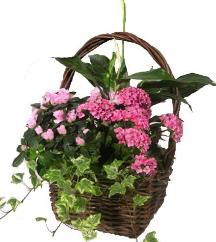 Photo of flowers: Blooming Planter Basket