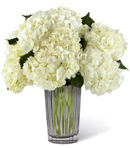 Photo of flowers: Ivory White Hydrangea in Vase