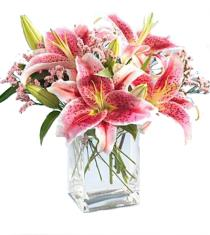 Photo of Pink Oriental Lilies in Vase  - B1-3701