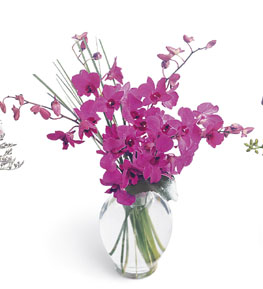 Photo of Morning Joy Dendrobium Orchids in Vase - B1-3702