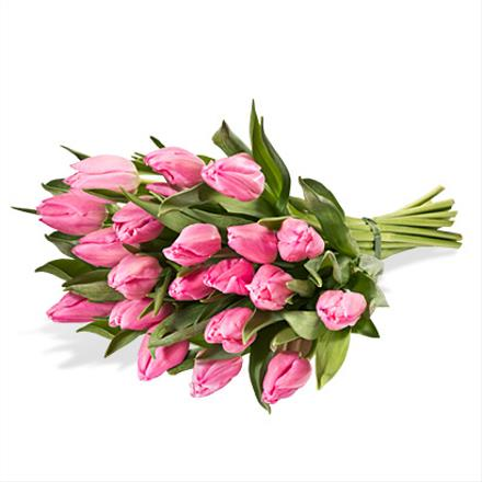Photo of flowers: Pure pink tulips