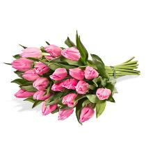 Photo of Pure pink tulips - A1284