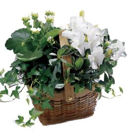 Photo of Mixed Plants with White - C33-2960