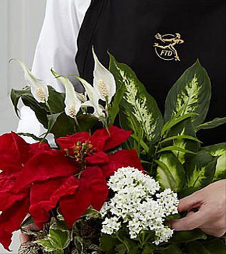 Photo of flowers: Florist Designed Holiday Planter