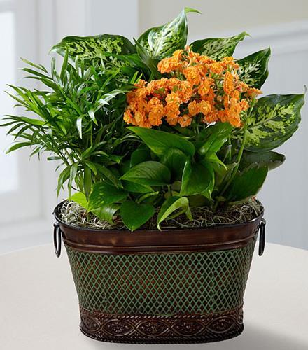 Photo of flowers: Dish Garden - Joy of Plants
