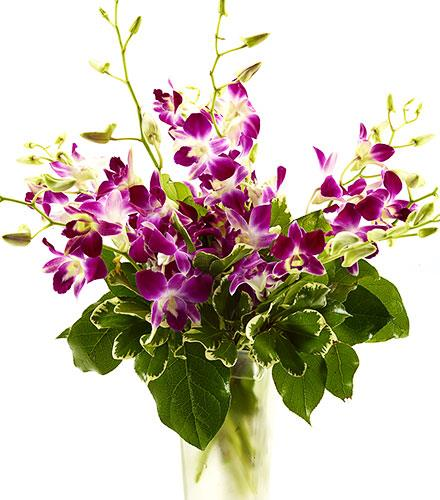 Photo of flowers: Dendrobium Orchids Vased