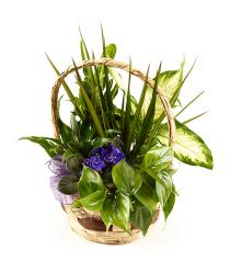 Photo of Planter Basket Mixed Plants  - BF2950