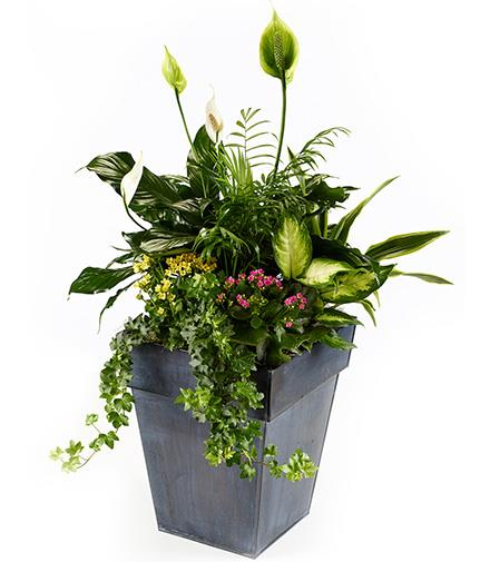 Photo of flowers: Tall Planter Limited Delivery