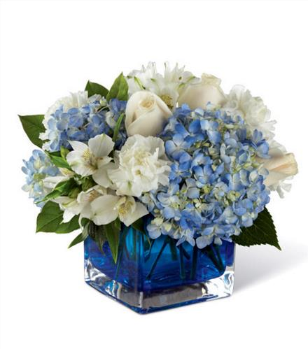 Photo of flowers: Peace & Light in Blue
