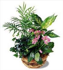 Photo of Basket Arrangement of Plants - AP