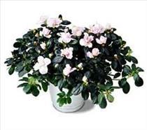 Photo of Blooming Plant Variety Varies - SP Blooming