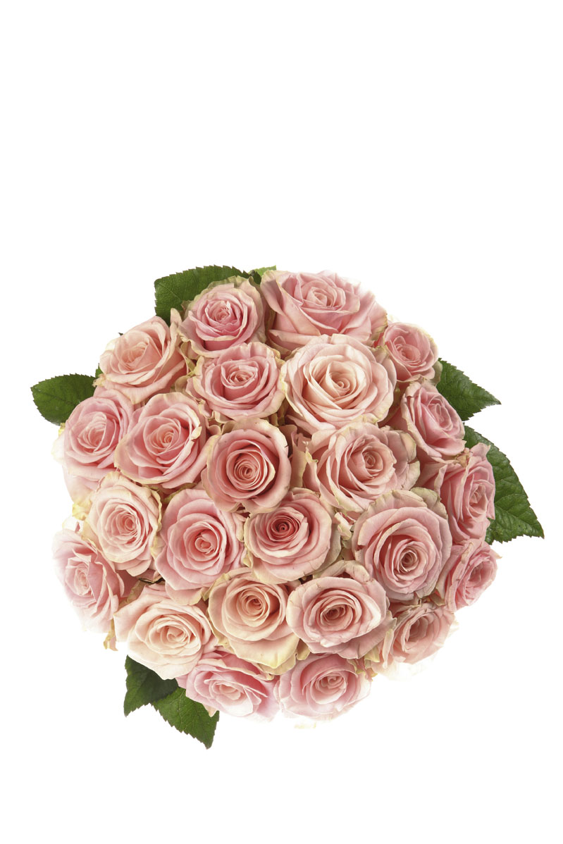 Photo of flowers: Bouquet of 25 Roses