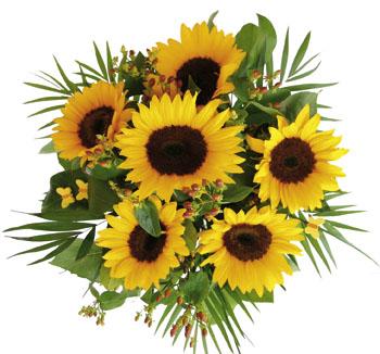 Photo of flowers: Sunshine Sunflowers