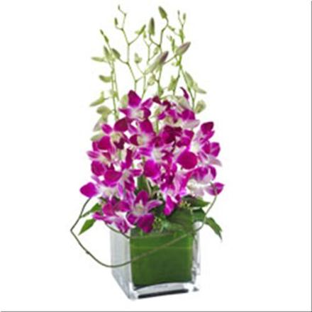 Photo of flowers: Violetta  Orchids