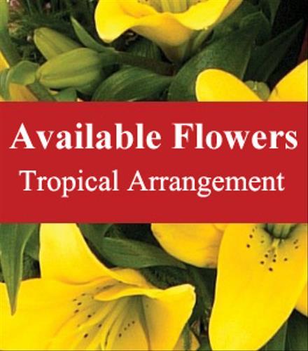 Photo of flowers: Tropical Arrangement Florist Choice