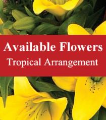 Photo of Tropical Arrangement Florist Choice  - BF3734
