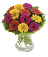 Photo of flowers: Germini Perfect Gift