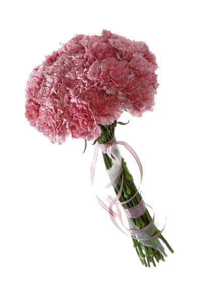Photo of flowers: Carnations Gift Wrapped