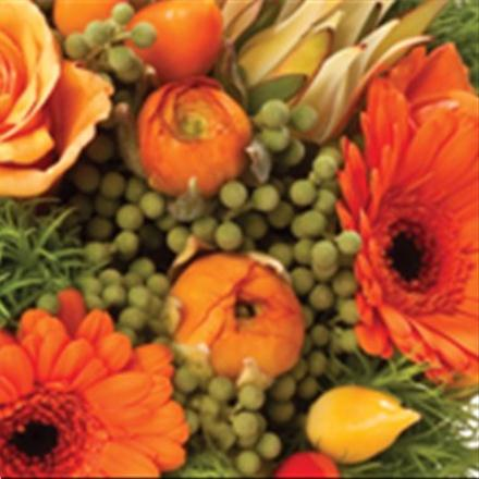 Photo of flowers: Clearly Orange - Gift Wrapped NO vase