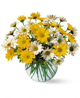 Photo of flowers: Dashing Daisies Vase Bouquet  Amall
