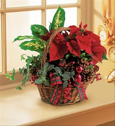 Photo of flowers: Planter Basket with Red Poinsettia