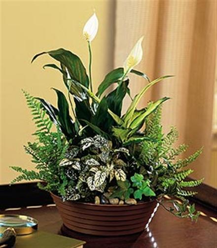 Photo of flowers: White Garden Mixed Planter