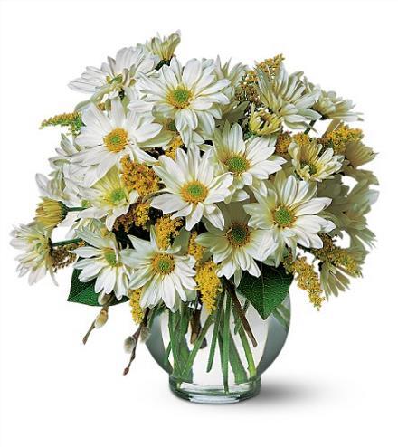 Photo of flowers: Daisy Cheer