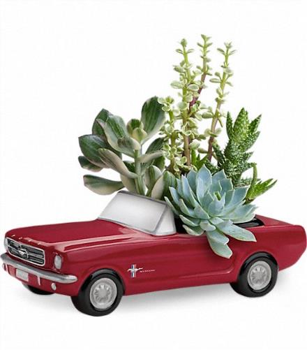 Photo of flowers: Succulents '65 Ford Mustang