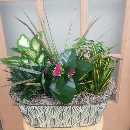 Photo of flowers: Metal Containers with Liners