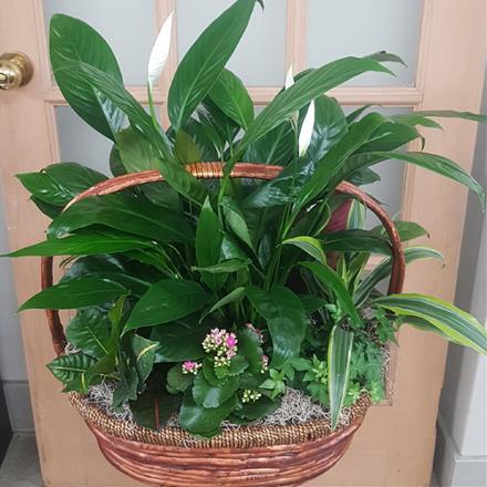 Photo of flowers: BF4284 Large Planter Basket