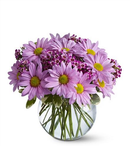 Photo of flowers: Delightfully Daisy
