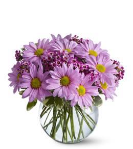 Photo of flowers: Delightfully Daisy
