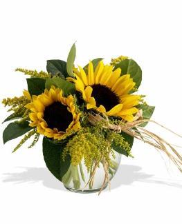 Photo of flowers: Sassy Sunflowers