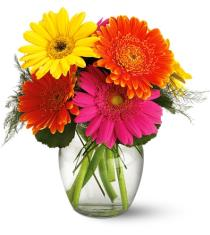 Photo of flowers: Fiesta Gerbera Vase Included