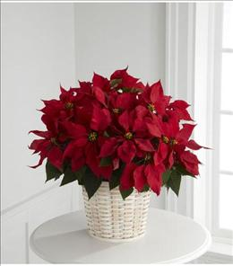 Photo of Red Poinsettia Basket (Large) - B11-3602