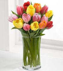 Photo of Rush of Color Mixed Tulips - FG74