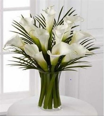 Photo of flowers: Always Adored Calla Lilies