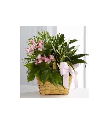 Photo of flowers: Living Spirit Dishgarden Planter