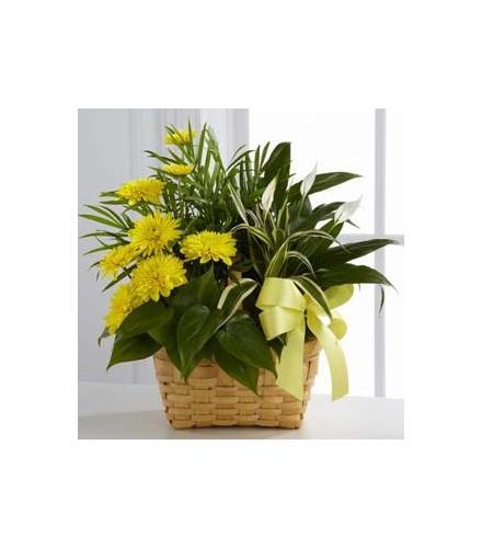 Photo of flowers: Loving Light Plant Garden