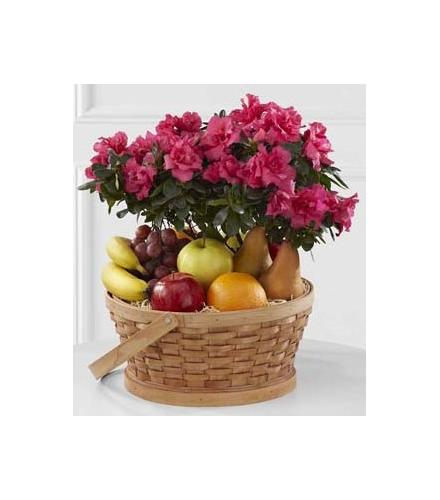 Photo of flowers: Encircling Grace Fruit & Plant Basket