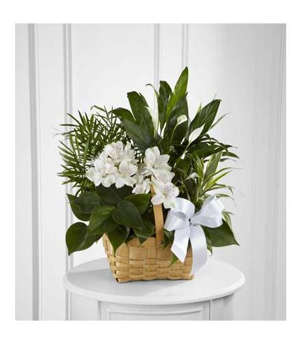 Photo of flowers: The FTD Peace & Serenity Dishgarden